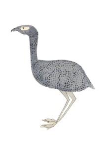 Dottyostrich